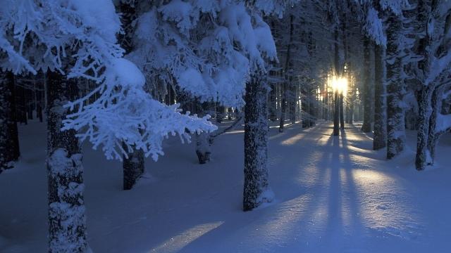 forest-sunrise-winter-trees-wallpaper-1